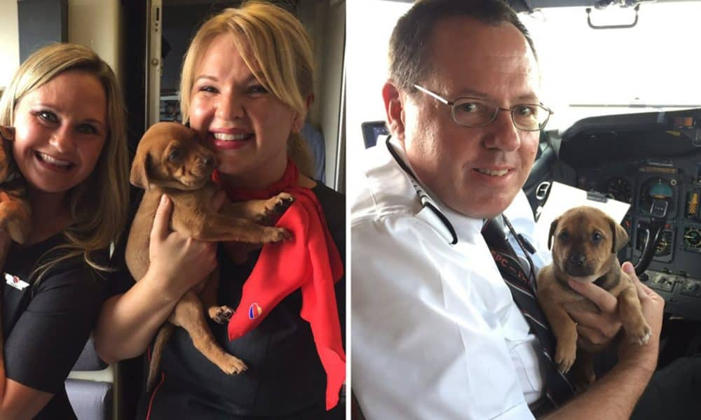 Southwest Airlines Fills Cabin With 64 Orphaned Pets From Harvey, Relocates Them To San Diego