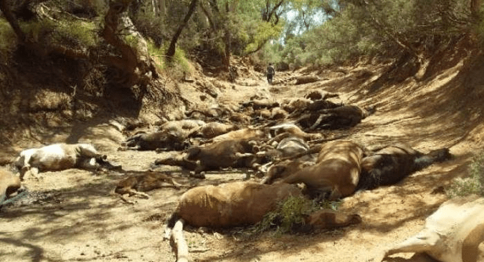 Extreme Heatwaves Have Hit Australia And Their Animals Are Dying By The Millions