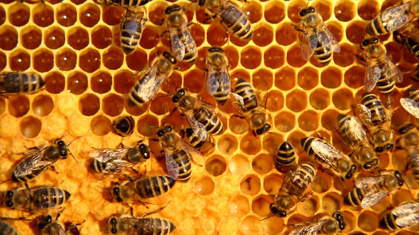 Half A Million Bees Attacked, Drowned And Burned In Texas – But With No Eyewitnesses