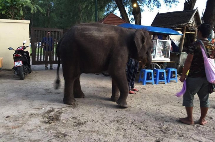 Baby Elephant Kidnapped And Forced To Pose For Photos In Unbearable Heat