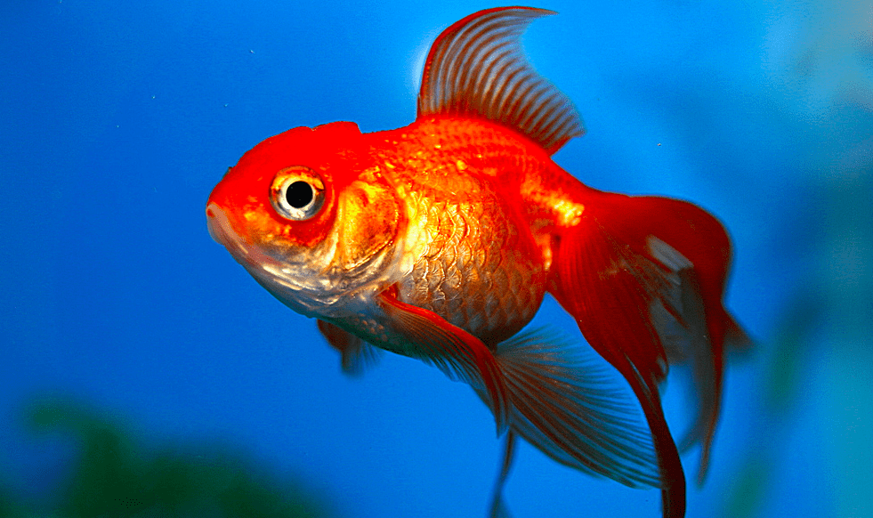 New Underwater Fish Songs Recorded Offshore Australia