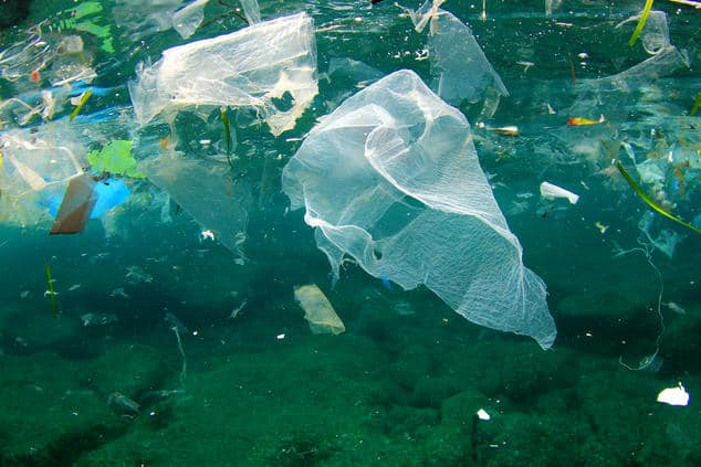 Scientists Discover Bacteria That Has Evolved To Eat Plastic In The Oceans