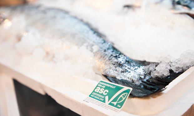 https://www.theguardian.com/environment/2015/sep/29/is-it-ok-to-eat-farmed-salmon-now