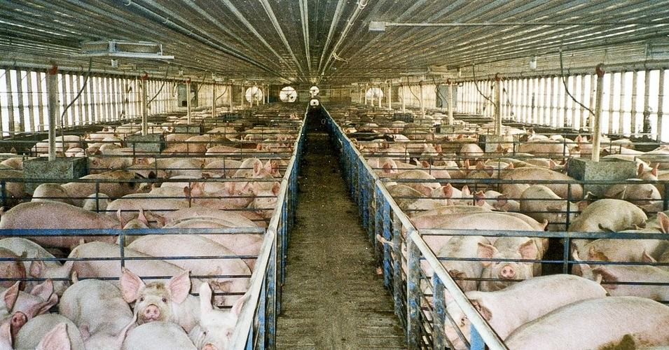Calling For Overhaul Of Nation's Food System, New Campaign Seeks Ban On Factory Farms