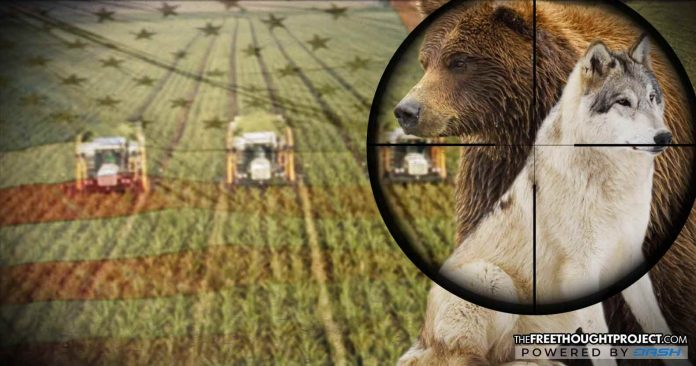 In 2017, US Gov't Slaughtered 1.3 Million Wolves, Bears, & Others In The Name Of Big Agriculture