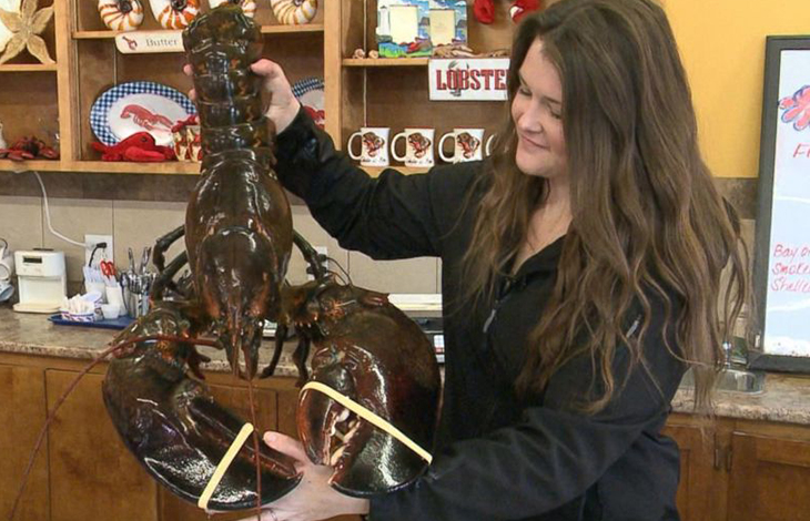 A 4 Foot-Long, 100-Year-Old Lobster Was Released Back To The Waters After A Kind Vegan Bought And Saved Him