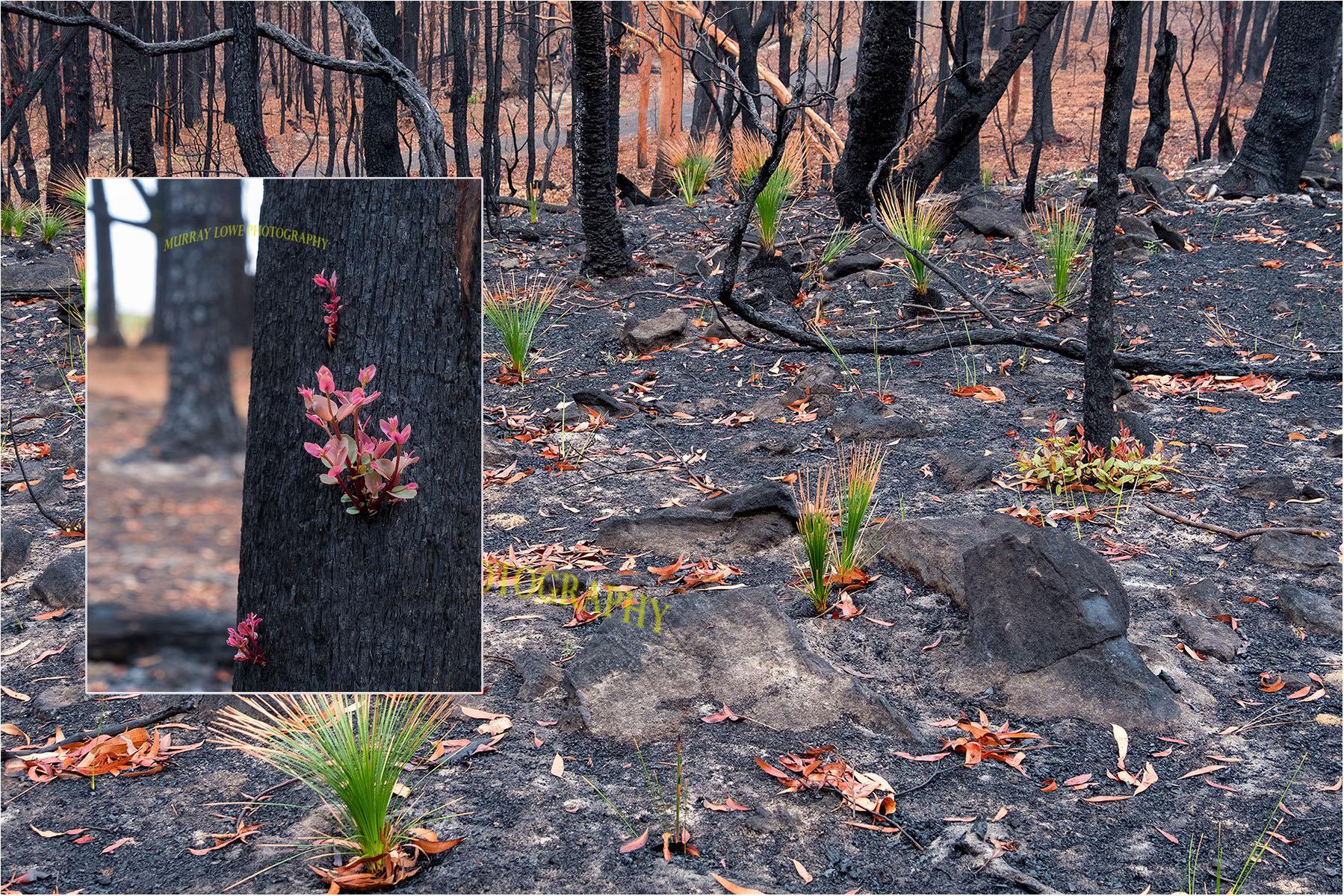 Photographer Captures Incredible Photos Of Regrowing Plant Life After Australia's Devastating Bushfire Crisis