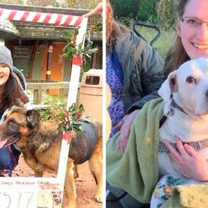 Retired Nurse Dedicates Her Life To Showering Abused And Abandoned Dogs With Love And Affection During Their Final Moments