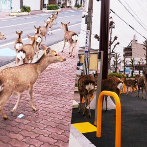 Animals Spotted Roaming The City Streets While The Humans Stay At Home
