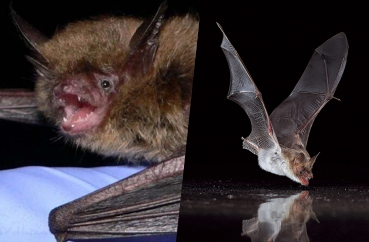 Terrified Citizens in Peru Attack Hundreds Of Bats In Their Caves With Lit Torches To Fight The Coronavirus Pandemic