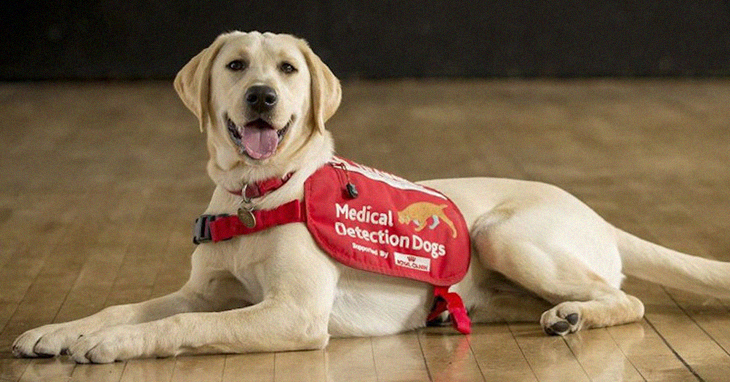 There Is A New Project To Have Medical Detection Dogs Assist In The Shortage Of Coronavirus Testing