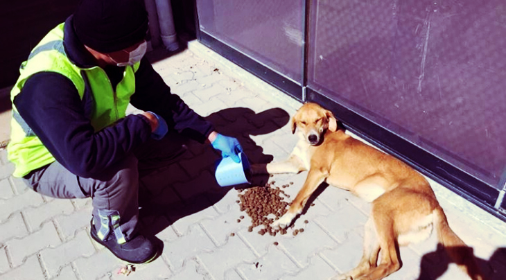Officials In Turkey Make Sure Shelter And Stray Animals Get Food And Water In Spite Of Lockdown