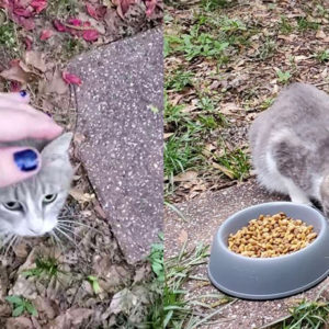 Woman Who Feeds Stray Mommy Cat Was Led To Meet Her Babies After Gaining Her New Furry Friend's Trust