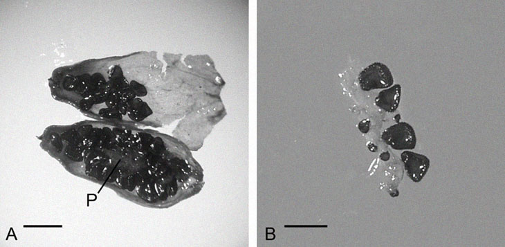 Scientists Turned A 32,000-Year-Old Seed Found In Ancient Squirrels Burrows Into A Plant
