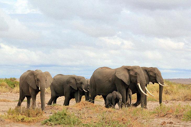Kenya's Elephant Population Has Impressively Doubled Over The Last Three Decades