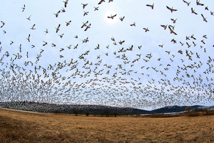 Presumably Hundreds Of Thousands Of Migratory Birds Are Mysteriously Perishing Across New Mexico