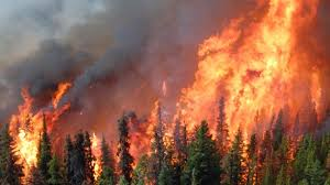 Understanding The Impact Of Forest Fires With Peter Lowes