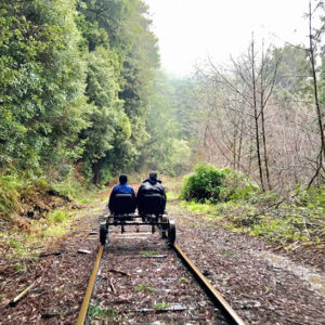 California's Magnificent Redwood Forest Can Be Enjoyed Via Railbike, And It Makes For An Astonishing Trip