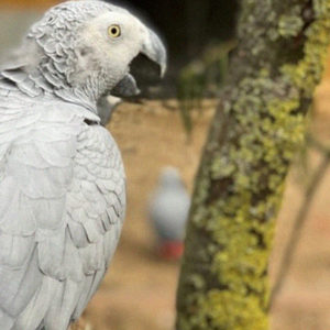"Parrots That ""Cursed"" Visitors Were Eventually Removed From A Zoo"