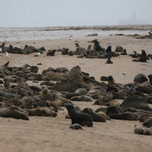 An Unprecedented Die-Off Of Thousands Of Seal Pups On A Namibia Beach Mystifies Conservationists