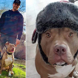 After 350-Pound Bear Attacks His Dog, California Resident Plows, Tackles  And Punches Bear To Save His Pit Bull