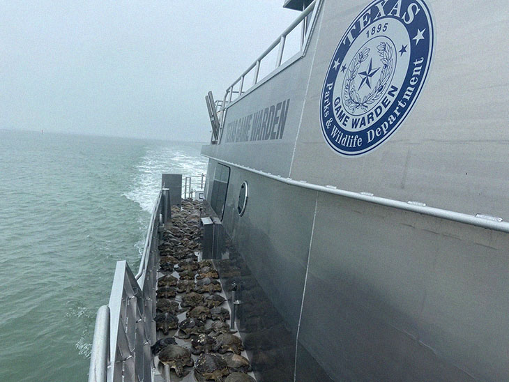 Thousands Of Sea Turtles Saved By Selfless Men And Women From Texas Freezing Weather