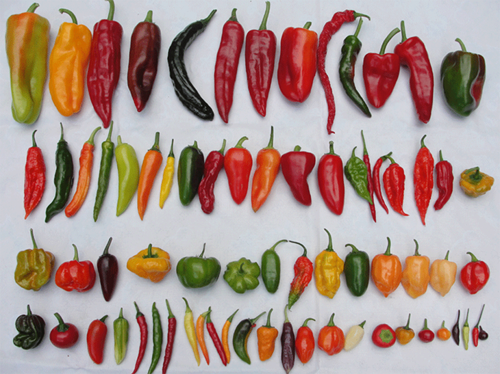 Initial Research Finds That Eating Chili Peppers Could Possibly Lengthen Your Life