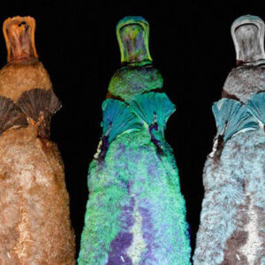 Forget That This Mammal Lays Eggs, Apparently Platypus Also Glow In The Dark
