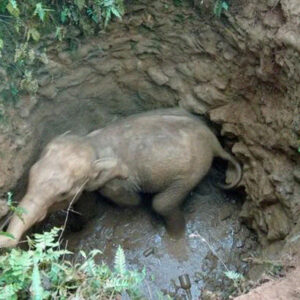 Baby Elephant Rescued In 8-Hour Operation After Falling Into 30-Foot Deep Well